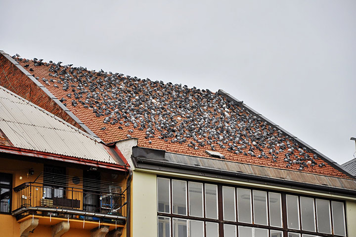 A2B Pest Control are able to install spikes to deter birds from roofs in West Hendon.