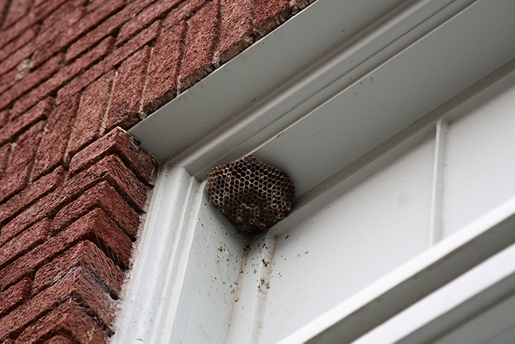 We provide a wasp nest removal service for domestic and commercial properties in West Hendon.
